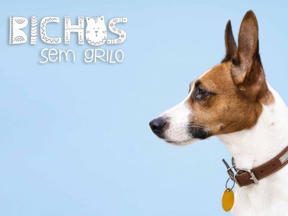 Logomarca veterinário PET